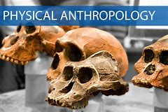 Course Photo for Intro to Physical Anthropology