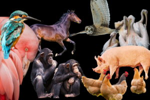 Course Photo for Topics in Value Theory: Critical Animal Theory